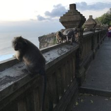 Monkeys at the temple